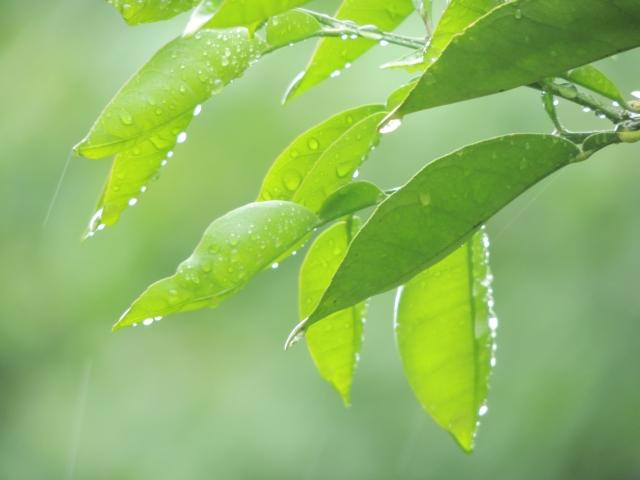沖縄の梅雨入りは早い!明けてしまうと地獄の日差し!?旅行は梅雨に