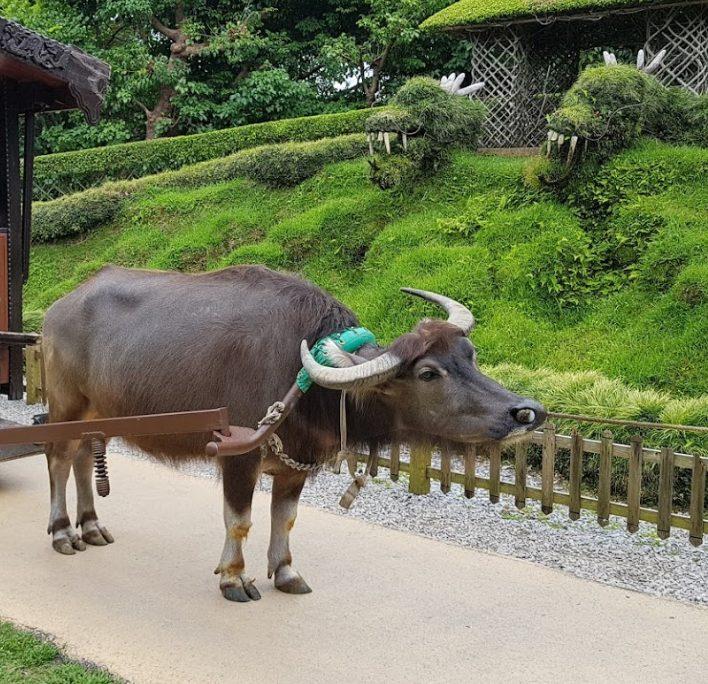 ビオスの丘(bios)はイベント満載の動植物園!