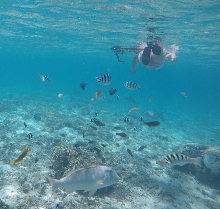 透き通る海とカラフルな魚!水納島は個人でもシュノーケリングが楽しめた!